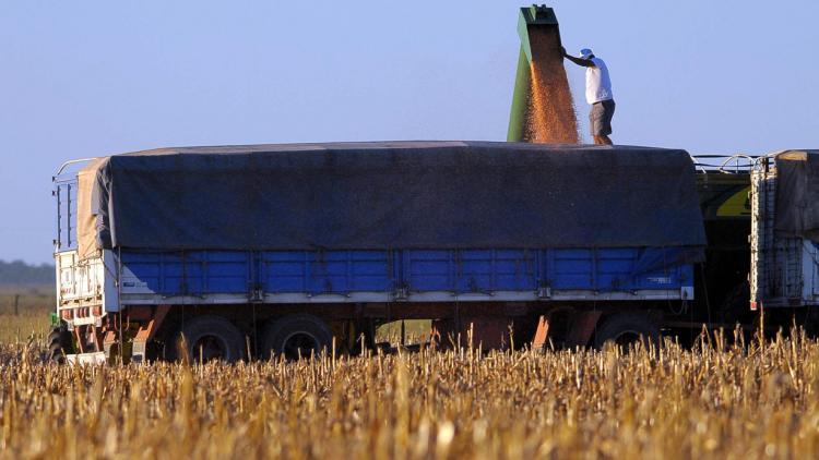 camion-cargando-maiz